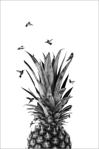Poster Oiseaux d'ananas