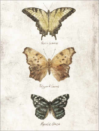 Poster Papillons II