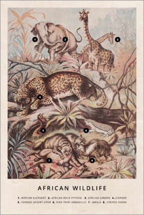 Poster  Faune sauvage africaine vintage (anglais) - Wunderkammer Collection