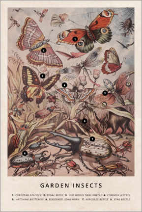 Sticker mural  Insectes du jardin (anglais) - Wunderkammer Collection