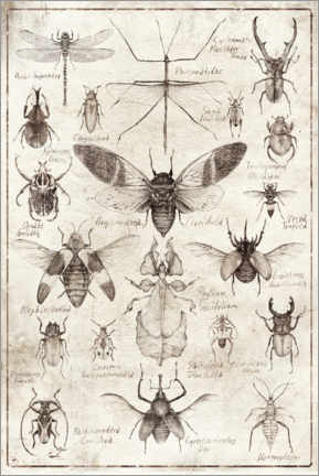 Poster  Insectes - Mike Koubou
