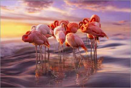 Tableau en plexi-alu  Sieste des flamants roses - Adrian Borda