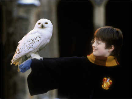 Tableau en plexi-alu  Harry Potter and the Sorcerer's Stone - Harry & Hedwig