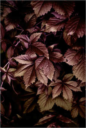 Poster Autumn Leaves