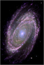 Sticker mural  Galaxie spirale M81 - NASA