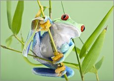 Sticker mural  Grenouille aux yeux rouges - Linda Wright