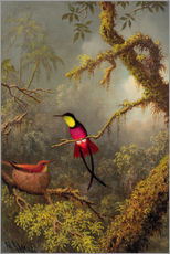 Tableau en plexi-alu  Couple de colibris topaze - Martin Johnson Heade