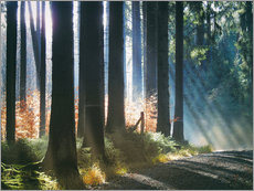 Tableau en plexi-alu  Morning Light in the Forrest - Martina Cross