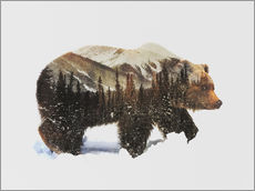 Sticker mural  Grizzli dans la neige - Andreas Lie