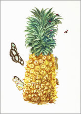 Sticker mural  Ananas et insectes - Maria Sibylla Merian