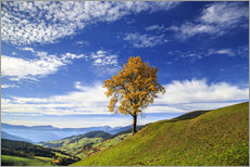 Tableau en plexi-alu  Isolated tree in autumn, Funes Valley, South Tyrol, Italy - Roberto Sysa Moiola