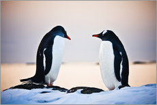 Tableau en plexi-alu  Two identical penguins
