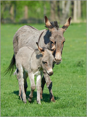 Sticker mural  Donkey mum and her little baby