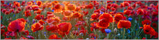 Poster  Champ de coquelicots, panorama - Art Couture