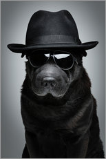 Poster Chien cool