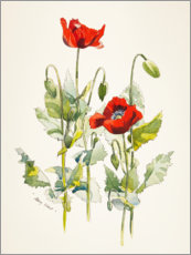 Poster  Coquelicots, aquarelle - Mary Want
