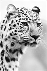 Poster  Jaguar - Art Couture