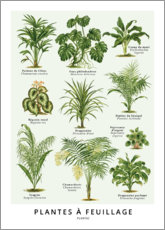 Poster  Plantes à feuillage - Wunderkammer Collection