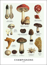 Poster  Champignons - Wunderkammer Collection