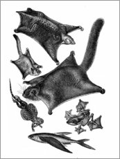Poster  Animaux parachutes - Wunderkammer Collection