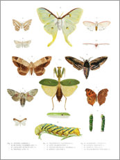 Poster  Couleurs des insectes II - Wunderkammer Collection