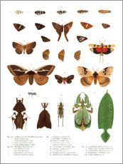 Poster  Couleurs des insectes VII - Wunderkammer Collection