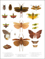 Poster  Couleurs des insectes VI - Wunderkammer Collection