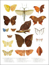 Poster  Couleurs des insectes III - Wunderkammer Collection