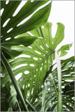 Poster  Monstera luxuriante - Sisi And Seb