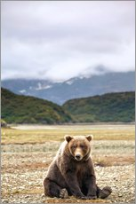Tableau en plexi-alu  Grizzly Bear se repose devant la baie de Kinak - Paul Souders