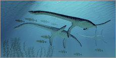 Sticker mural  Three Plesiosaurus dinosaurs migrate with a school of fish. - Corey Ford