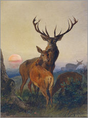Sticker mural  A Stag with Deer at Sunset - Charles Jones