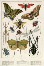 Sticker mural  Insectes - English School