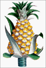 Sticker mural  Pineapple, 1789.