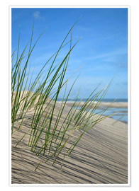 Poster  Dune grasses before playscape - Susanne Herppich
