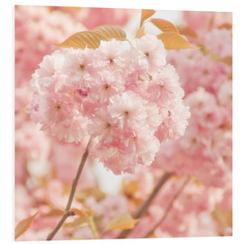 Tableau en PVC  Japan Cherry - INA FineArt