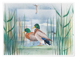 Poster  Pair of wild ducks - Franz Heigl