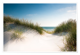 Poster Dune with shiny marram grass
