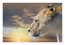Poster  Lioness at sunset - Werner Dreblow
