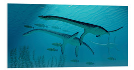 Tableau en PVC  Three Plesiosaurus dinosaurs migrate with a school of fish. - Corey Ford