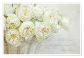 Poster Roses blanches