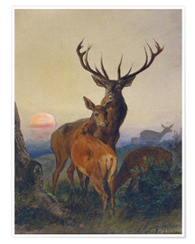 Poster  A Stag with Deer at Sunset - Charles Jones