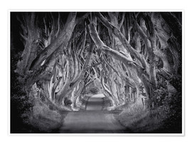 Poster The Dark Hedges