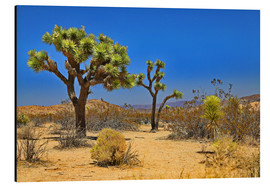 Tableau en aluminium  Joshua Tree - fotoping