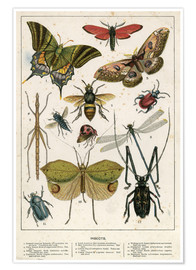 Poster  Insectes - English School