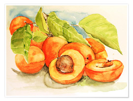 Poster Abricots
