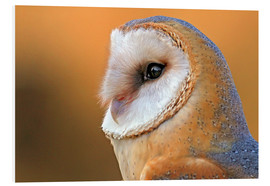 Tableau en PVC  Owl Birds - WildlifePhotography