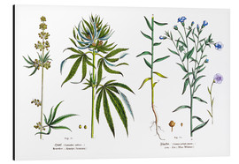 Tableau en aluminium  Cannabis and Flax - Matthias Trentsensky