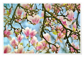Poster Magnolias look in the Spring