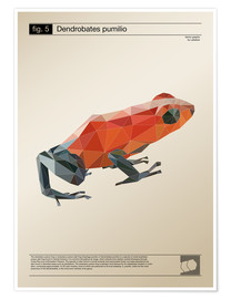 Poster  Grenouille polygonale (anglais) - Labelizer